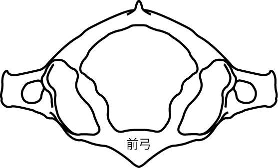 環椎(第1頸椎)