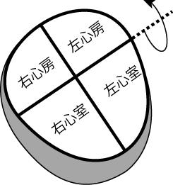 心臓が矢状面上を水平軸で後方に回旋している図