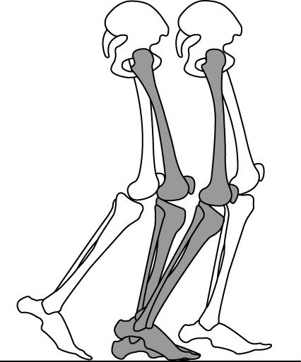 立脚中期での踵挙上