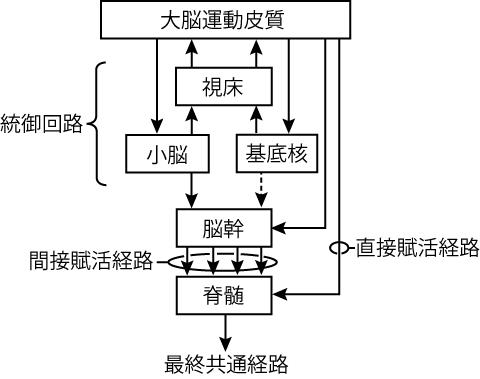 運動系の経路