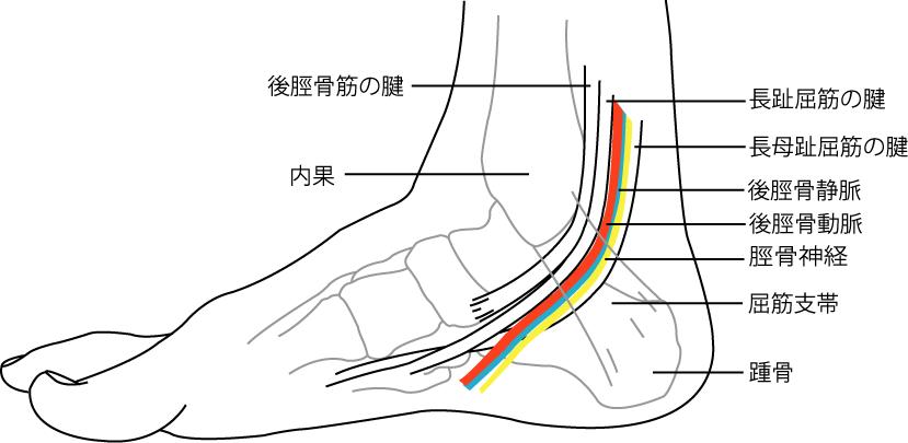 後脛骨動脈と足根管