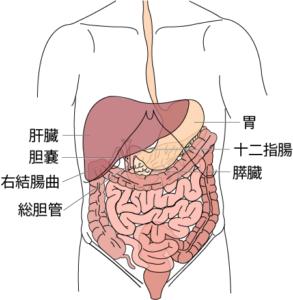 消化器の概観