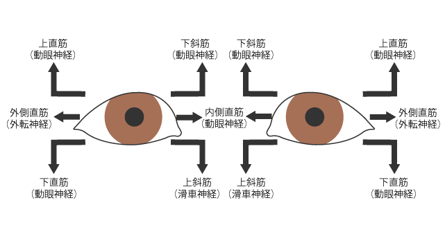 眼球運動の検査