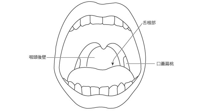咽頭反射の刺激部位