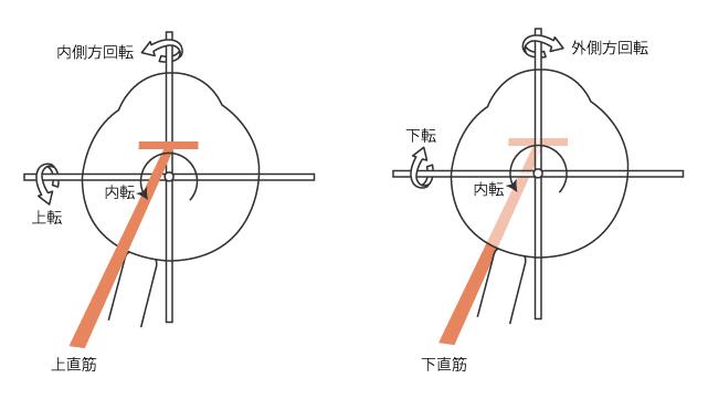 上直筋と下直筋の作用