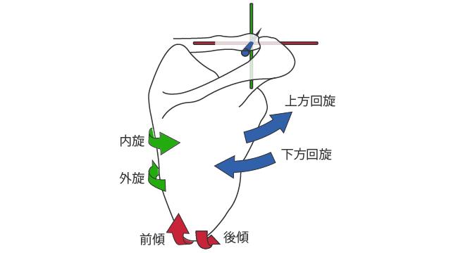 肩鎖関節の運動