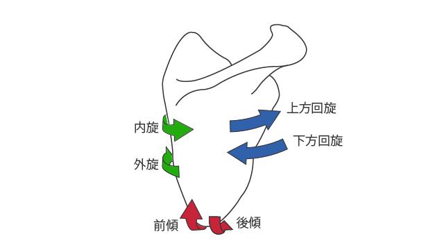 肩甲骨の回転運動