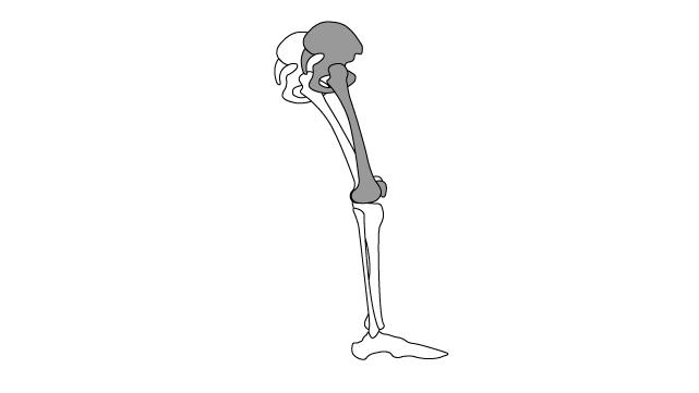 股関節屈曲制限による膝関節屈曲の減少